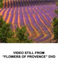 Flowers of Provence 3