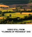 Flowers of Provence 4