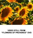 Flowers of Provence 5