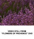 Flowers of Provence 6