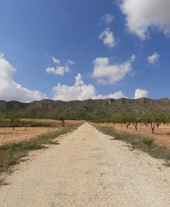 Virtual Cycle Ride Olive Groves 3
